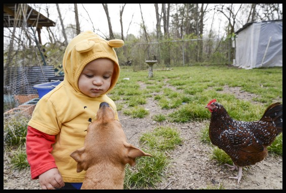 with lillie and a chicken