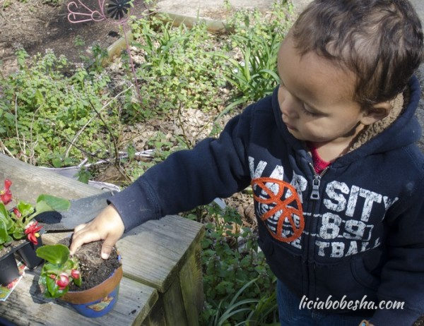 3 Ways to Introduce Your Child to Gardening and Urban Farming